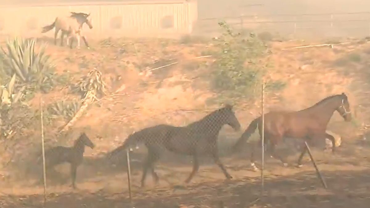 Horse Runs Back Into Danger to Save Horses From CA Fire Threat