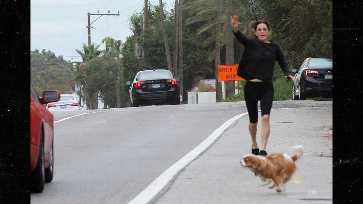 Courteney Cox's Dogs Run Into Traffic on PCH, Saved by Driver