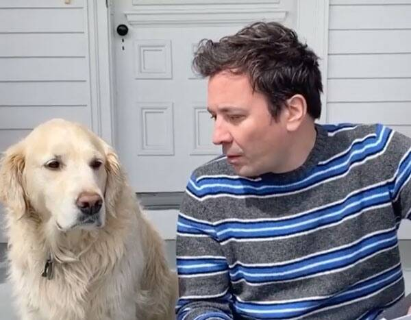 "Watch Jimmy Fallon Get Trolled By His Dog During Hilarious ""Interview"""